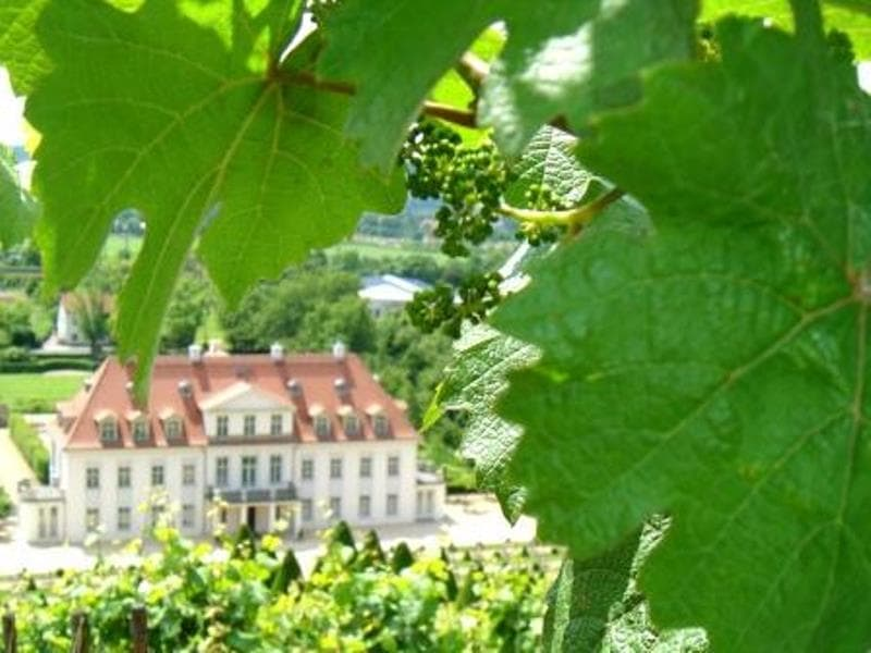Radebeul Weinrebe mit Schloss Wackerbarth webcVerenaRiedel